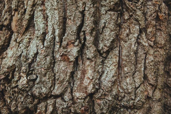 wood-tree-bark-english-oak