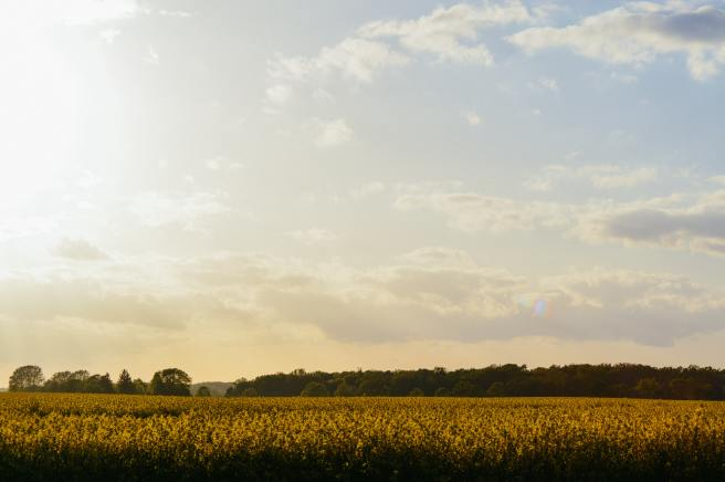 agriculture-countryside-cropland-83499