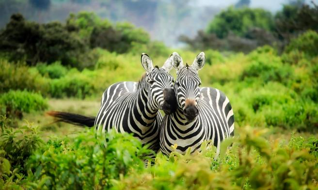 africa-animals-conservation-247376