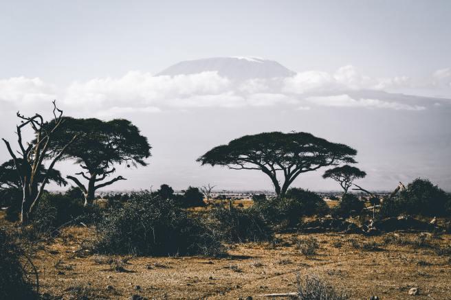 adventure-africa-bush-861339