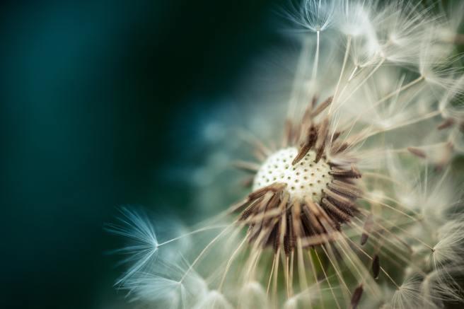 bloom-blossom-close-up-206756