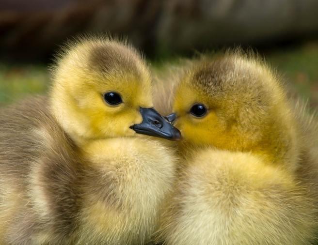 animal-baby-beak-157465