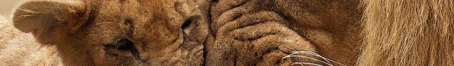 animal-cute-fur-africa-40803